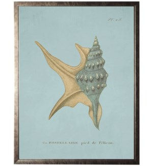 Plate 28 Seashell on spa background