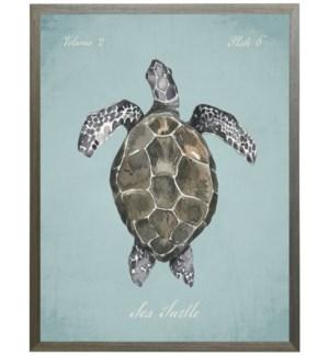 Sea turtle on spa background
