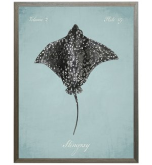 Stingray on spa background