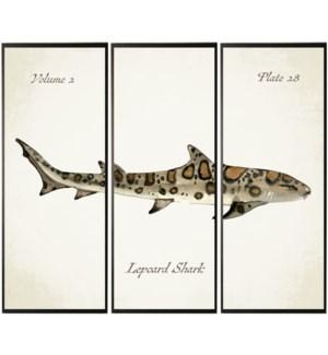 Triptych Leopard shark in watercolor