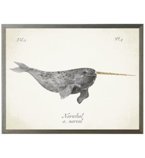 Narwhal Whale on natural background