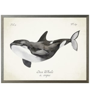 Orca Whale on natural background