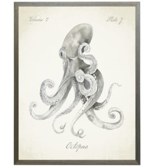 Octopus on natural background