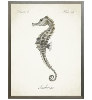 Sea Horse on natural background