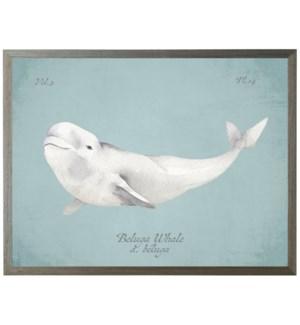Beluga Whale on spa background