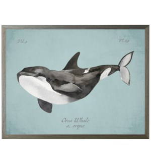 Orca Whale on spa background