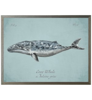 Grey Whale on spa background