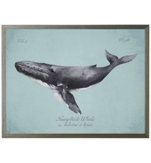 Black Humpback Whale on spa background