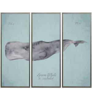 Triptych Sperm Whale in watercolor
