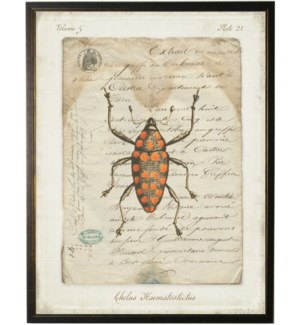 Bug A on french vintage bookplate