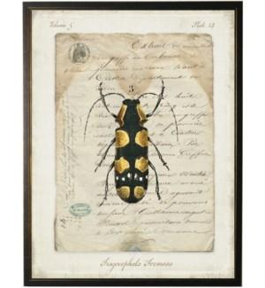 Bug B n french vintage bookplate