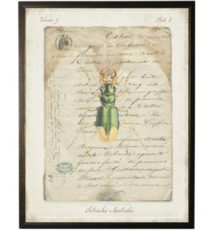Bug C on french vintage bookplate