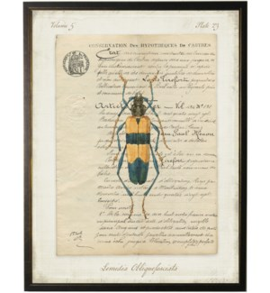 Bug D on french vintage bookplate