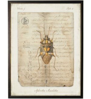 Bug F on french vintage bookplate
