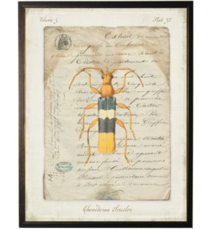 Bug G on french vintage bookplate