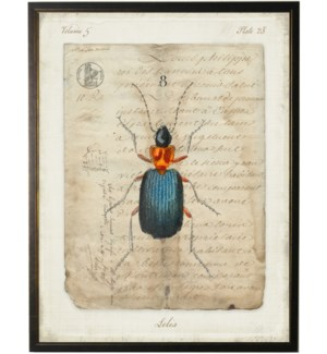 Bug H on french vintage bookplate