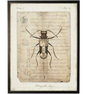 Bug I on french vintage bookplate