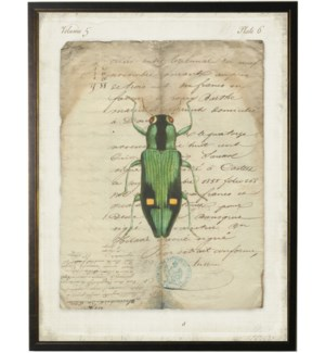 Bug J on french vintage bookplate