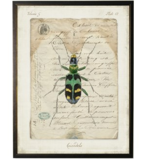Bug L on french vintage bookplate