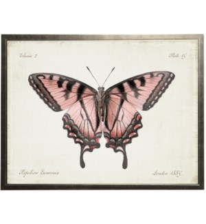 Plate 15 pink butterfly