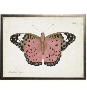 Plate 7 pink butterfly