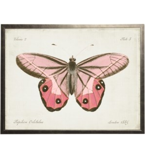 Plate 8 pink butterfly