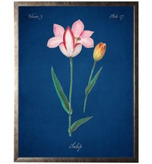 16X20 1380-60 Tulip bookplate on navy