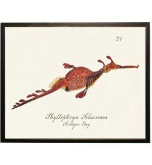 Seahorse vintage bookplate