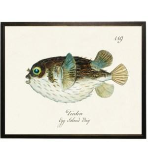Diodon fish bookplate