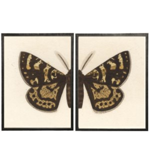 Diptych Black and Brown Butterfly