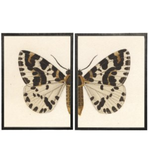 Diptych White, Black and Brown Butterfly