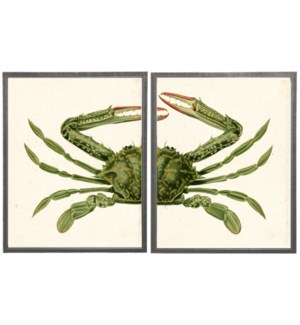 Diptych Green Crab