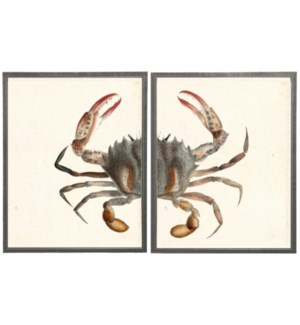 Diptych Red Pincher Crab