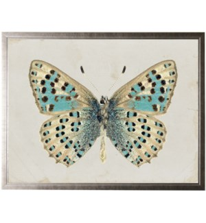 Turquoise and tan butterfly