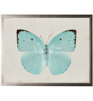 Pale turquoise butterfly with two brown spots