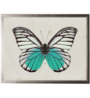 Black and white butterfly with turquoise accents