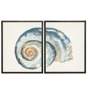 Watercolor diptych shell