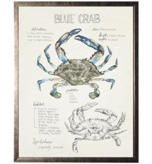Watercolor and sketched nature study of a blue crab