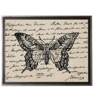 Butterfly on calligraphy postcard background