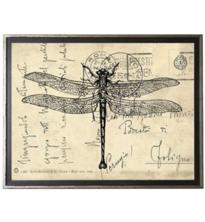 Dragonfly on calligraphy postcard background
