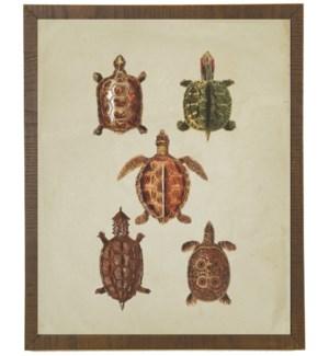 Turtles on linen background