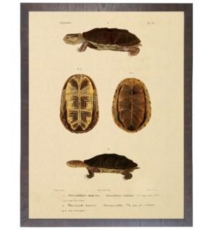 Turtle bookplate