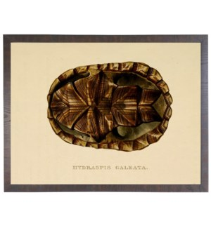 Turtle shell Plate