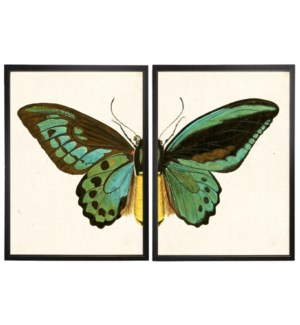 Diptych Turquoise Butterfly