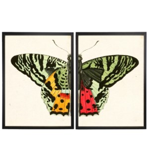 Diptych Green Butterfly
