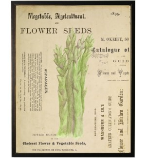 Watercolor Asparagus on title page