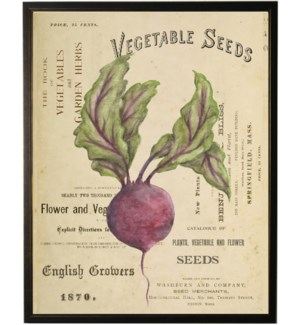 Watercolor Radish on title page