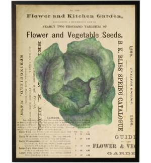 Watercolor Cabbage on title page
