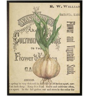Watercolor Onion on title page