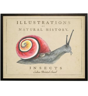Watercolor snail on natural history background